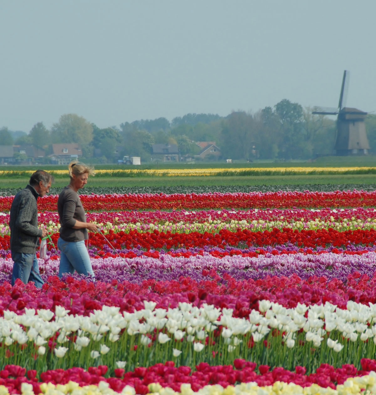 Tulipanmark 1 Holland