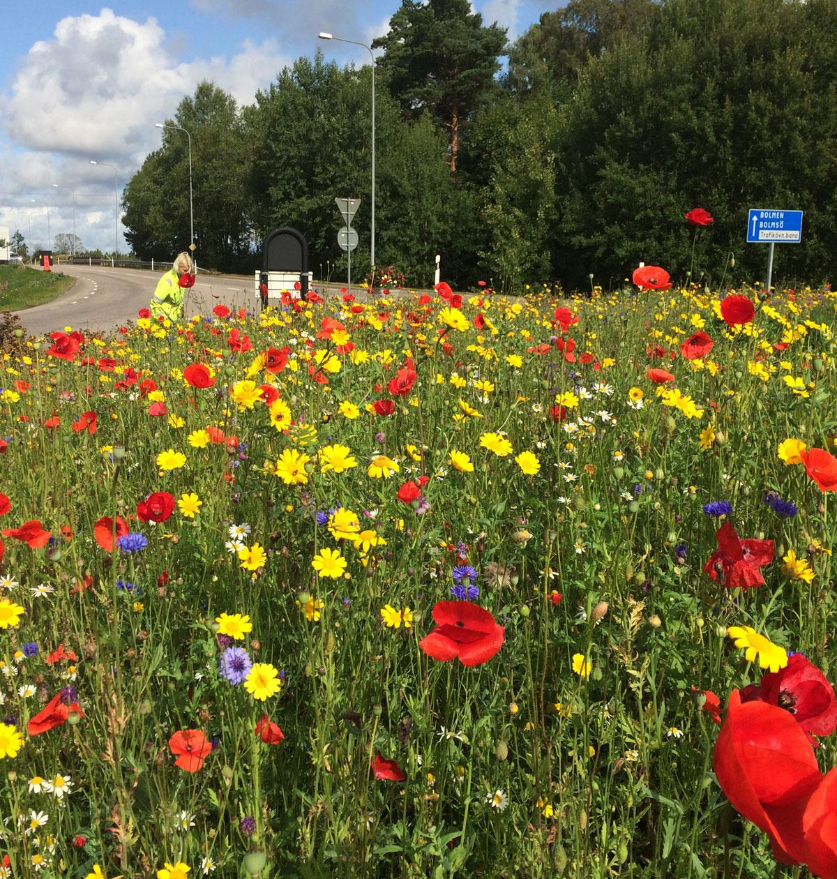 Cornfield Mix - Ljungby kommun