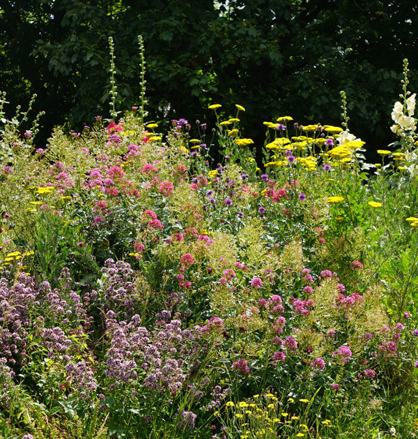 Cottage-garden-mix