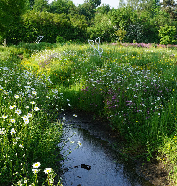 waters-edge-meadow