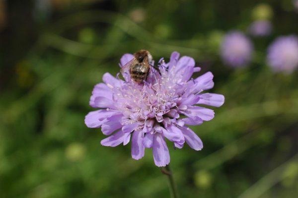 Butterfly Bouquet Staudemåtte