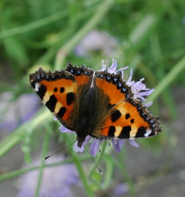 Butterfly Bouquet Staudemåtte 1